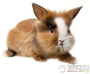 兔子可以吃香蕉皮吗 最好不要给兔子吃香蕉皮