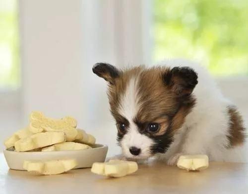 狗狗食物中毒怎么办?狗狗食物中毒的防治